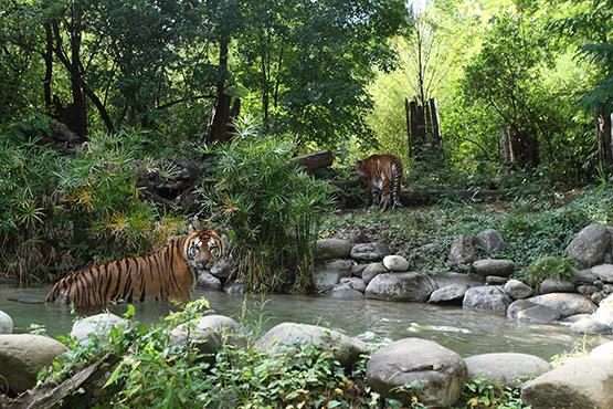 Giardino Zoologico Di Pistoia