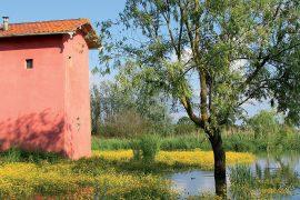 padule-fucecchio-area-umida-interna-più-vasta-d'Italia