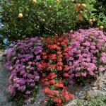 giardini_buggiano_10