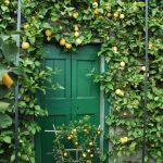 giardini_buggiano_5