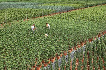 delizie-in-miniatura-giardini-rinascimentali