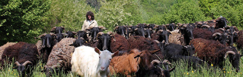 pastori-innamorati-monti-valli-lavoro