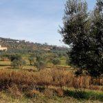 borgo-tizzana-6