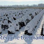 aib-proteggi-piante-polizza-assicurativa-pistoia