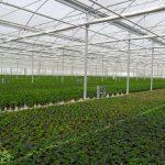 artigianfer-serre-piante-pistoia