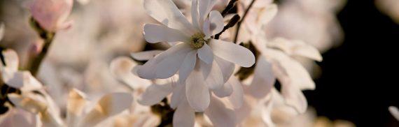 La primavera accolta con un fiore