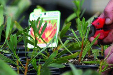 flora-toscana-pistoia-settore-florovivaistico