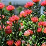 flora-toscana-fiori-discoverpistoia