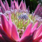 flora-toscana-settore-florovivaistico