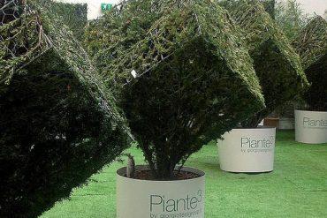 immagine-copertina-piante-al-cubo-pistoia