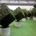 piante-al-cubo-2