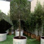 piante-al-cubo-3