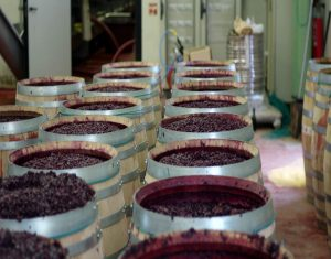 vino vegan fattoria casabianca siena fuoriexpo