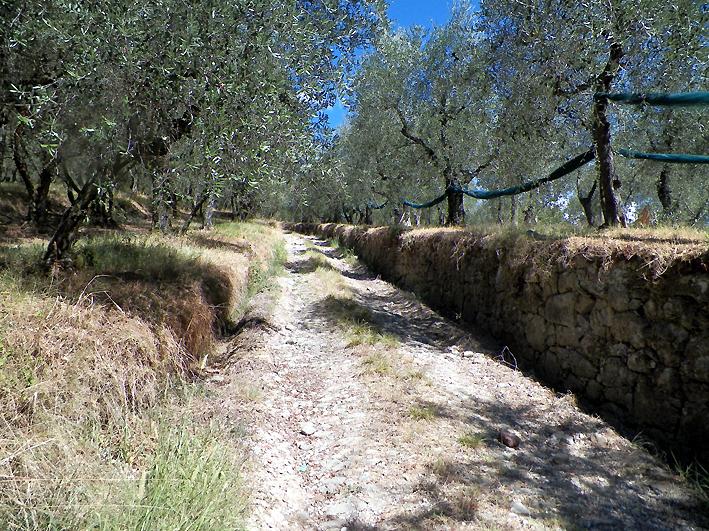 sentiero colle a buggiano