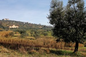 borgo tizzana 6