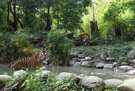 zoo pistoia 02