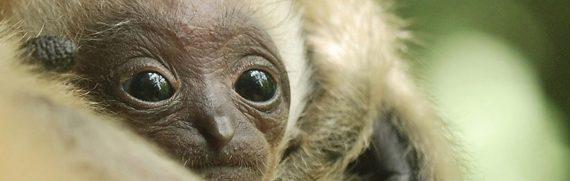 1920x609 siam gibbone zoo pistoia