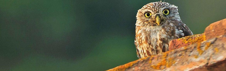 notte-europea-della-civetta-padule-riserva-discoverpistoia