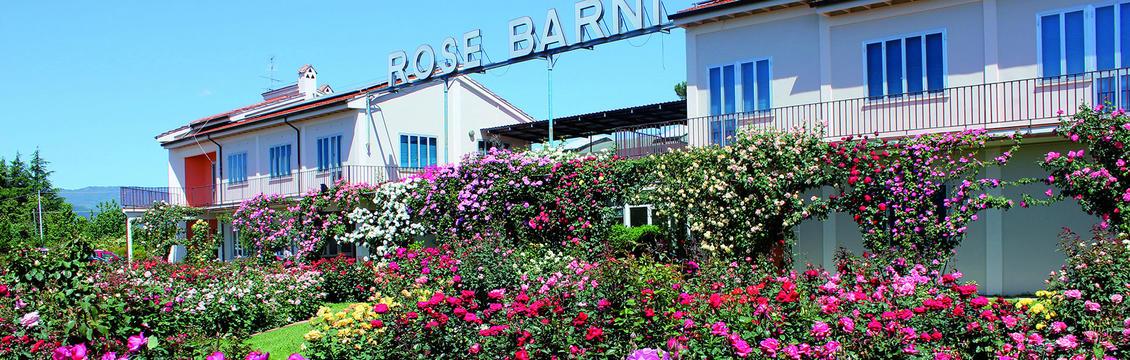 rose-barni-discoverpistoia