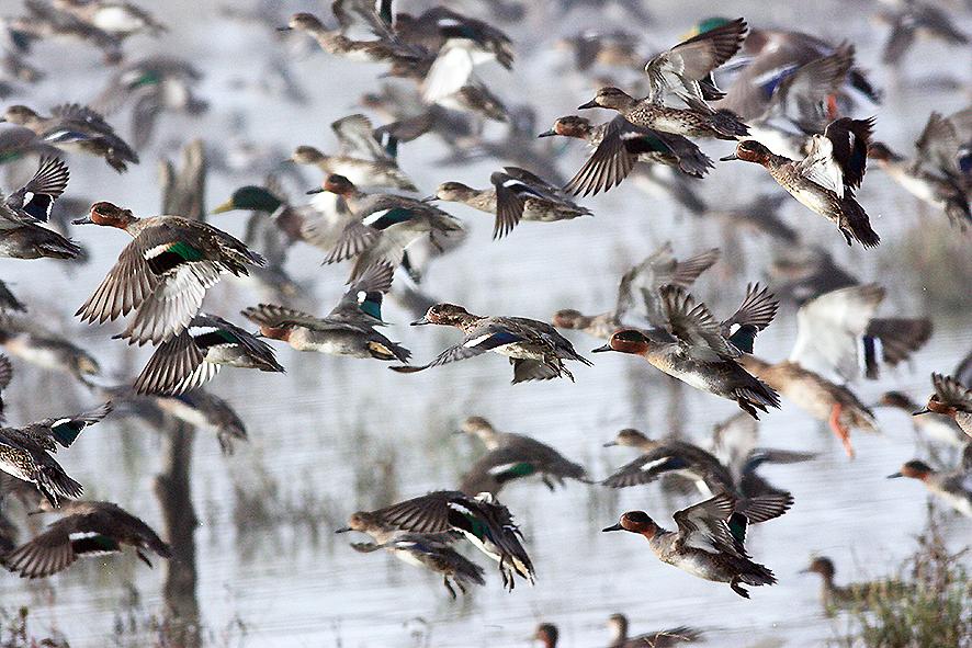 A Castelmartini ornitologi da tutta la Toscana