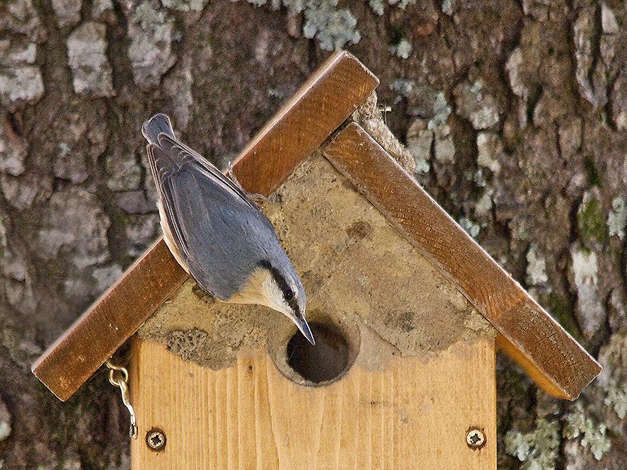 Un giardino per gli uccelli