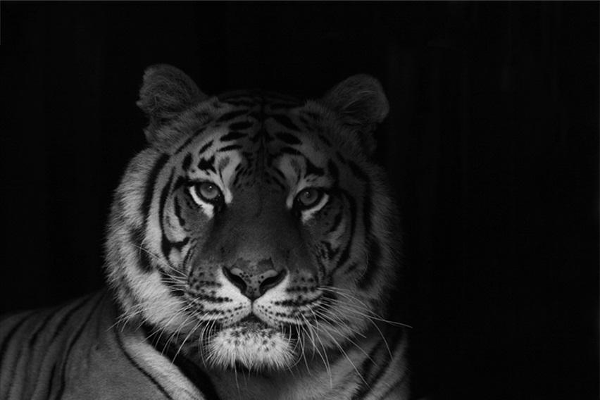 Di notte allo Zoo di Pistoia…