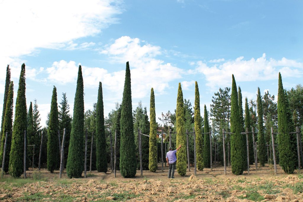 Alla scoperta dell'Arboreto dei cipressi