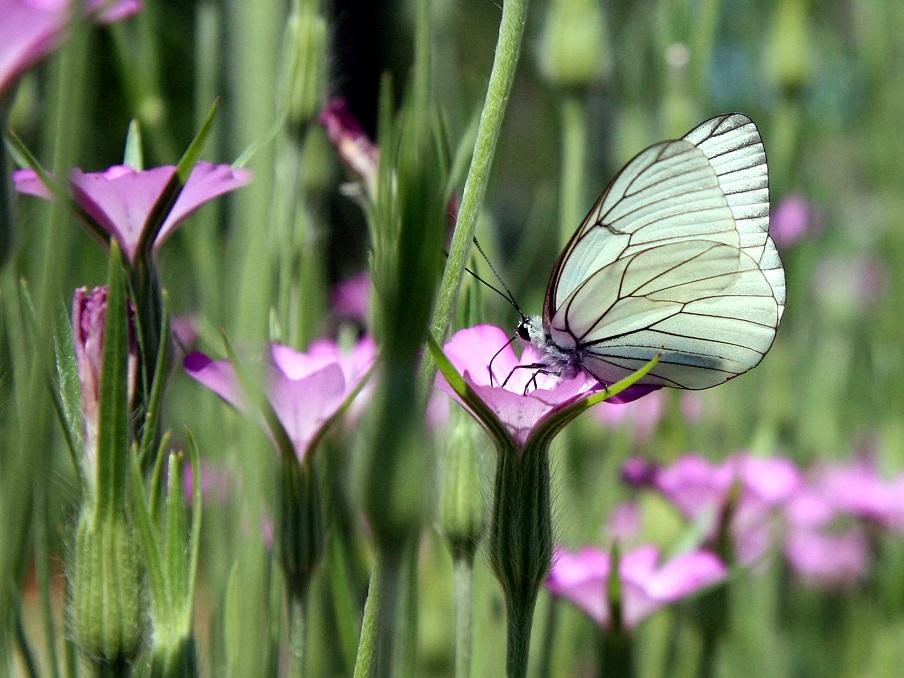 """""""Laudato si': dal messaggio alla pratica. La conservazione della natura"""""""