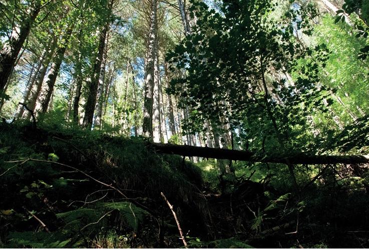 Terapia forestale a Pian dei Termini