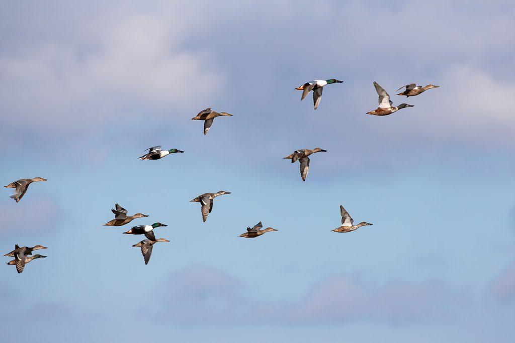 Record di biodiversità nel Padule di Fucecchio